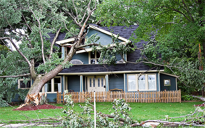 Wind Damage - Golden Triangle DKI